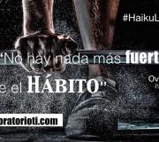 haiku habito