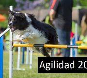 Agilidad 2017
