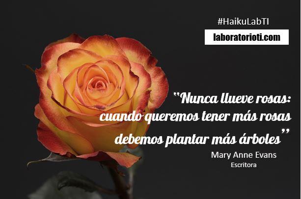 haiku rosas