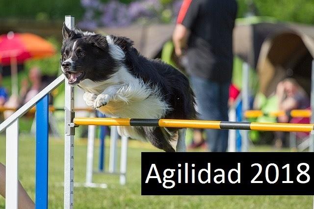 Agilidad-2018