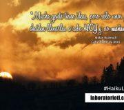 haiku hoy bushnell