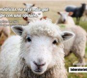 haiku ovejas