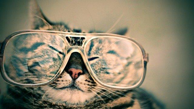 gatos gafas
