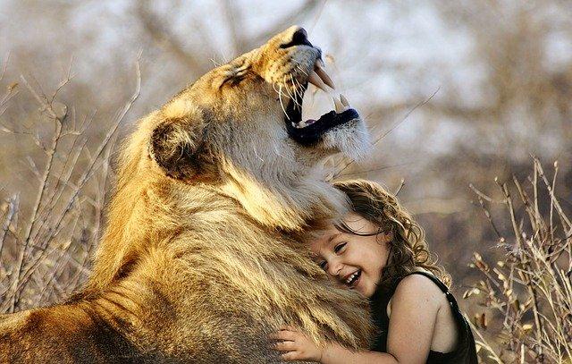 enfrentarse a un leon