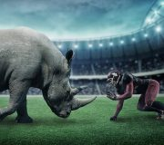 rinoceronte gris